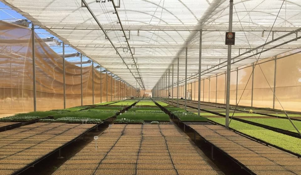 cultivo protegido estufa imgrower