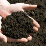 Solo Fértil para Agricultura Orgânica