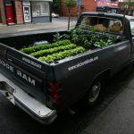 horta móvel truck farm : horta