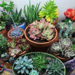 como plantar suculentas orgânicas