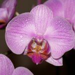 como plantar orquídeas orgânicas