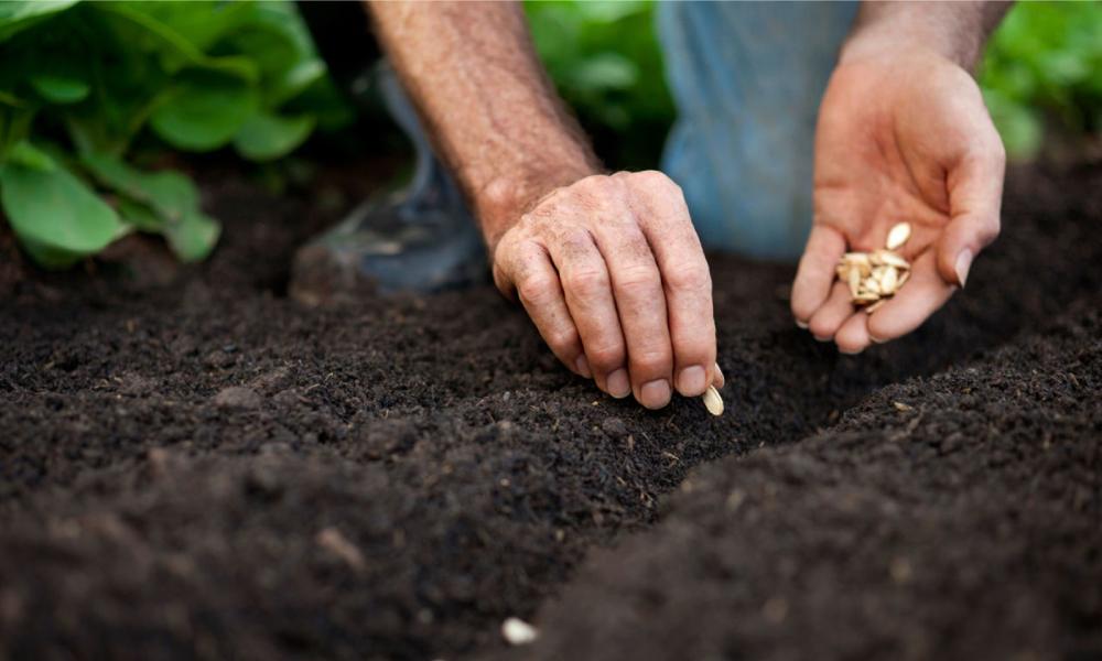dicas para preparar uma sementeira