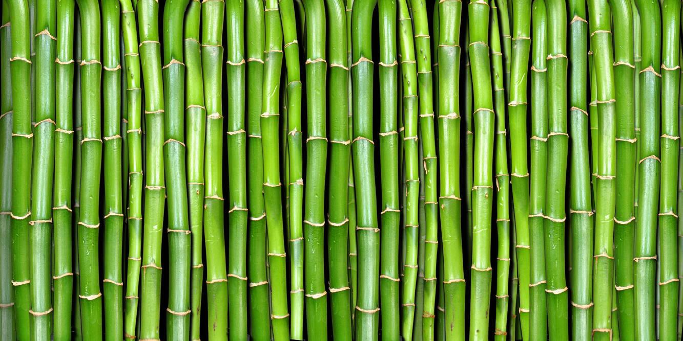 como plantar bambu orgânico