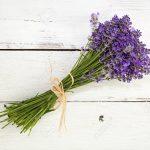 O Charme e o Cheiro: Saiba Como Plantar Lavanda Orgânica