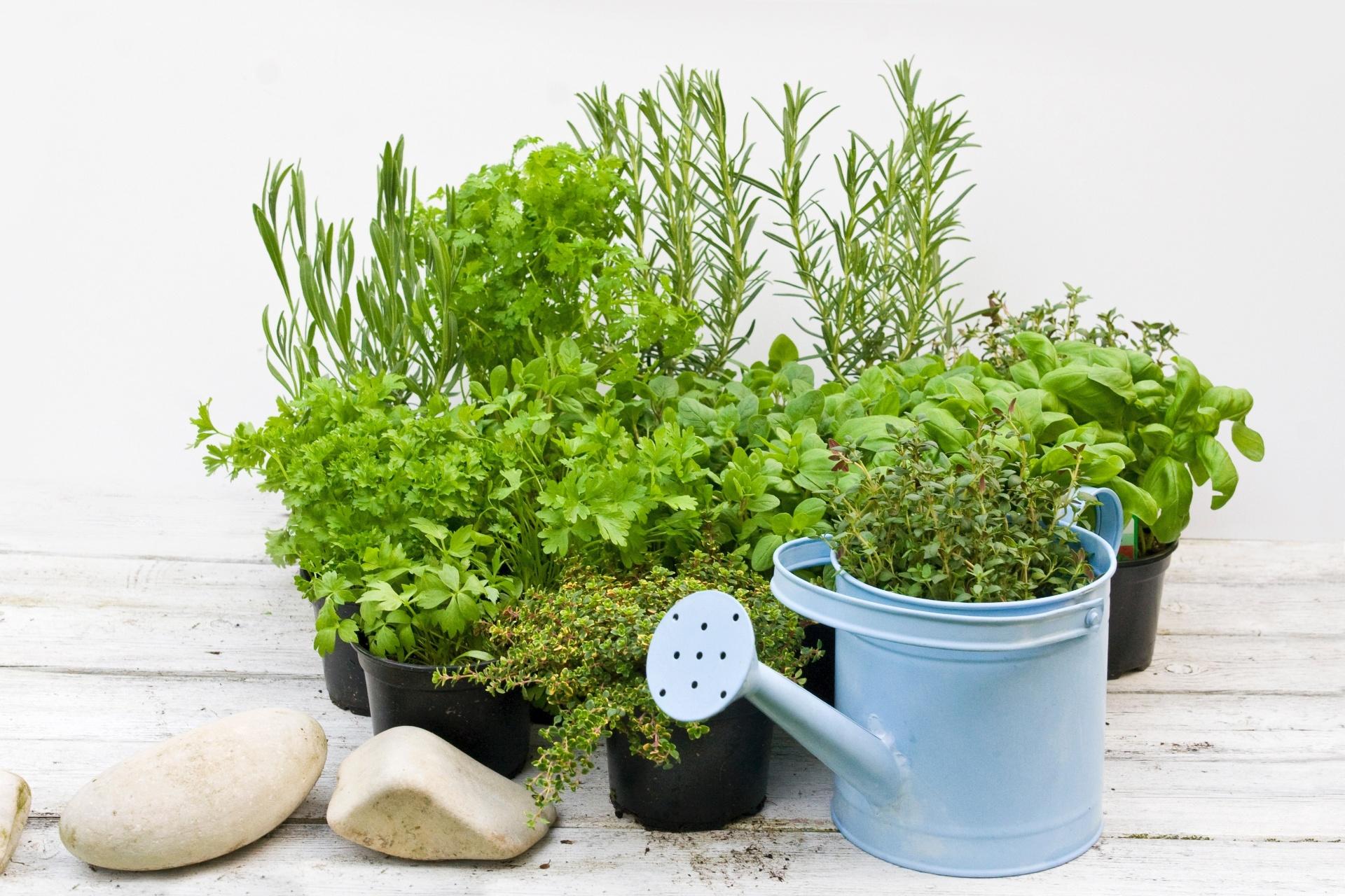 como fazer uma horta em vasos
