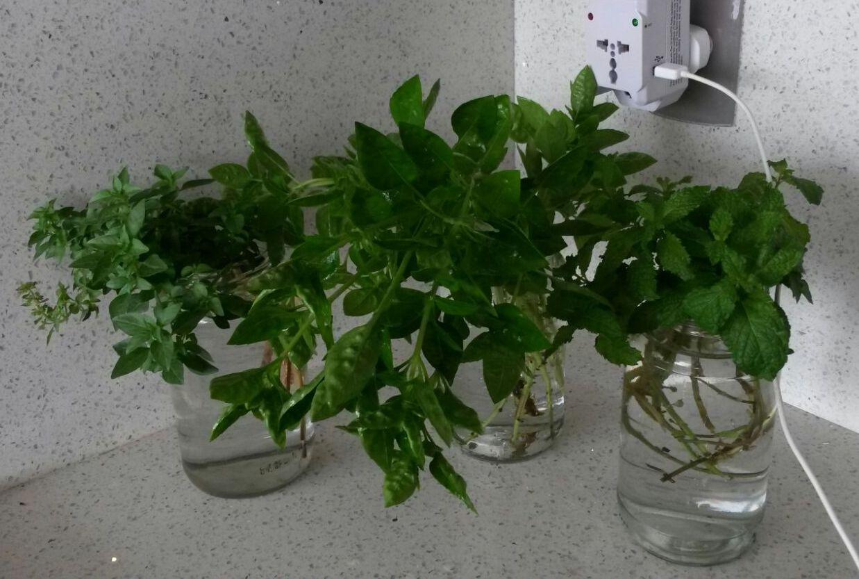 como enraizar plantas em água