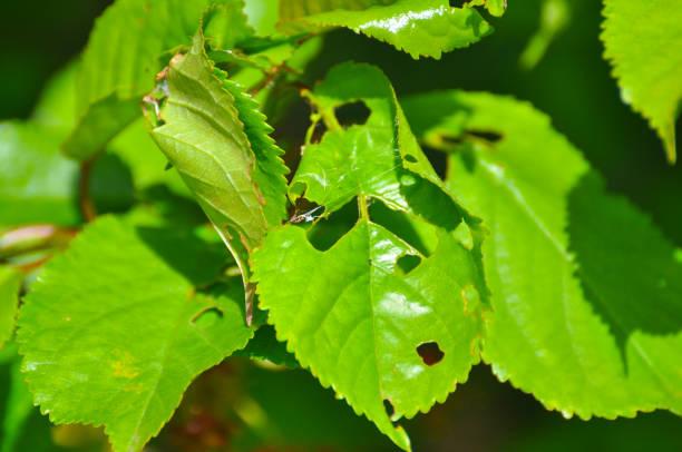 problemas mais frequentes encontrados em folhas
