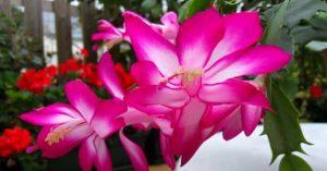 plantas que não precisam de sol : flores para sombra